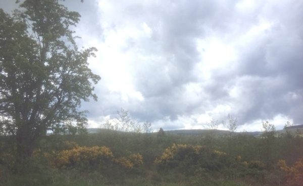 C. 1 acre land at Mullinaveige, Roundwood, Co Wicklow